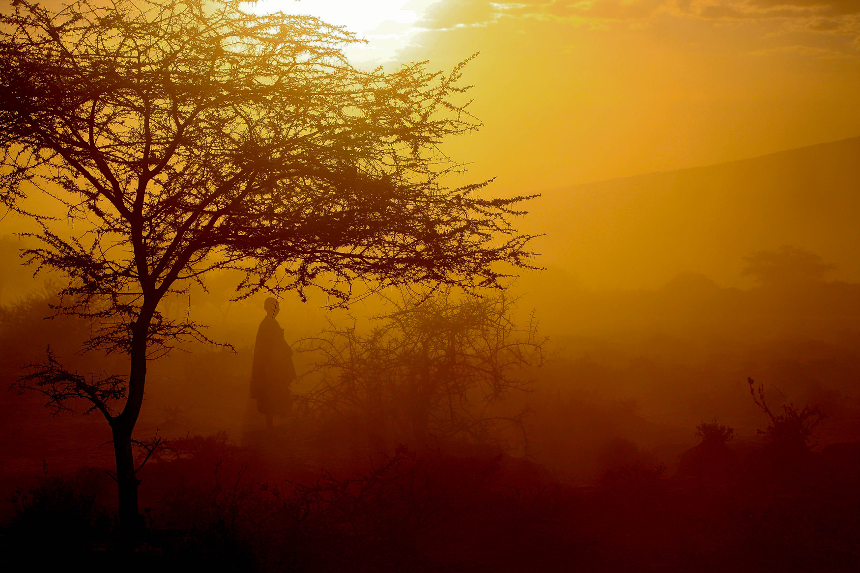silhouetted masai women and tree in Tanzania Africa - sunset
