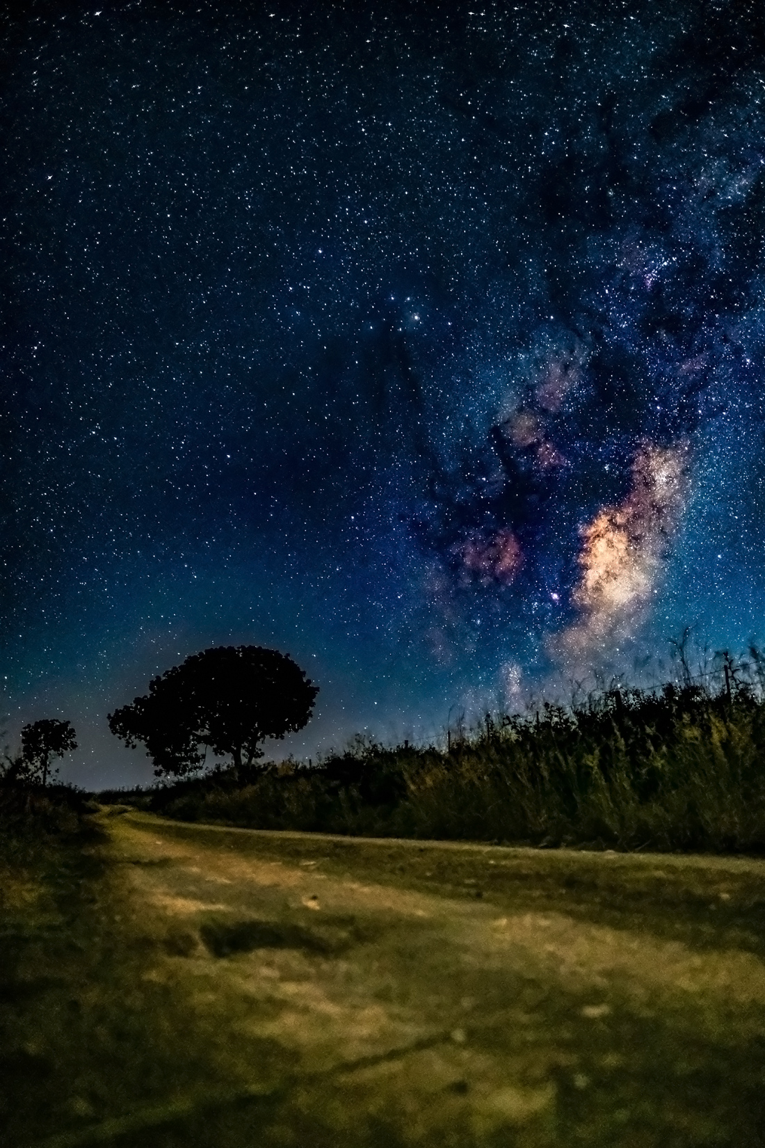 Milky Way on an empty dirt road with silhouetted tree in the distance - night landscape
